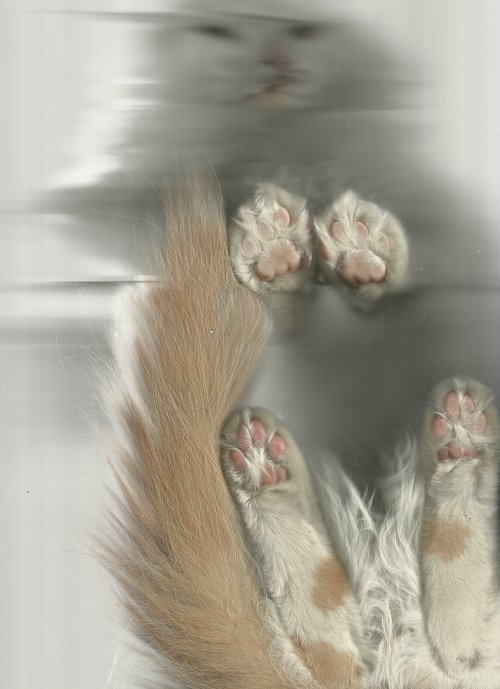 thecatscan:  This cat scan was submitted by a user named brielle, with no further description, and it's easily, out of all the submissions I've seen, my favorite.  (Bear in mind there are enough submissions to this that I haven't even seen all of them yet.)