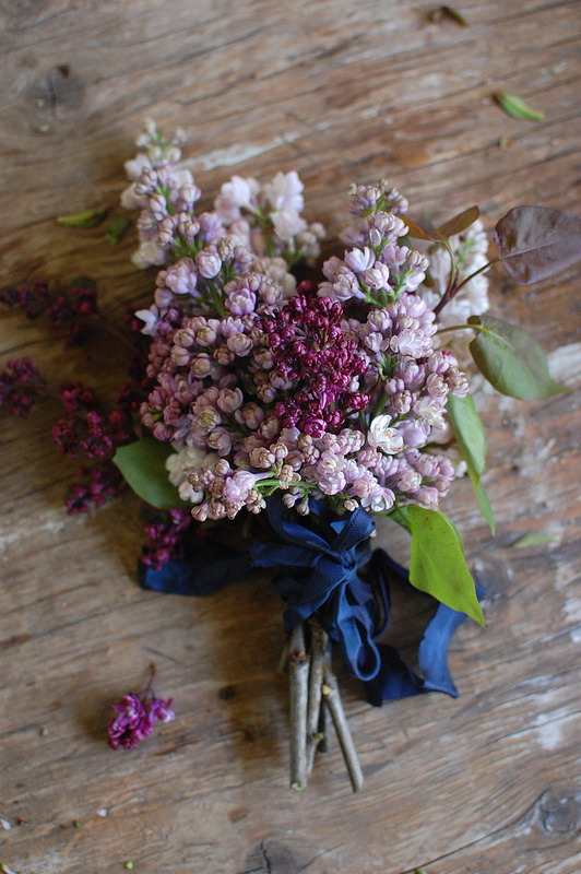 grayskymorning:  lilacs » frolic blog