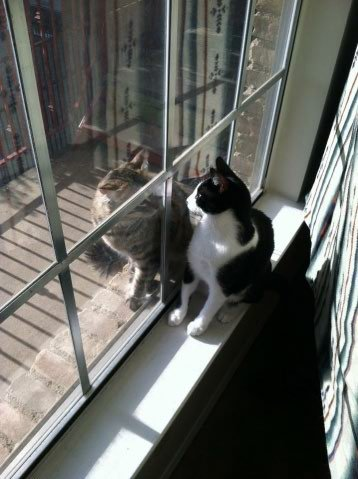 cookienoogie:  Asbel and friend.My kitty and a new window fwend. :D Usually get kids tapping on our window 24/7. Drives us bonkers.