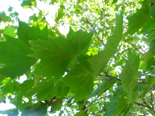 Photo 1: Close Up leaves