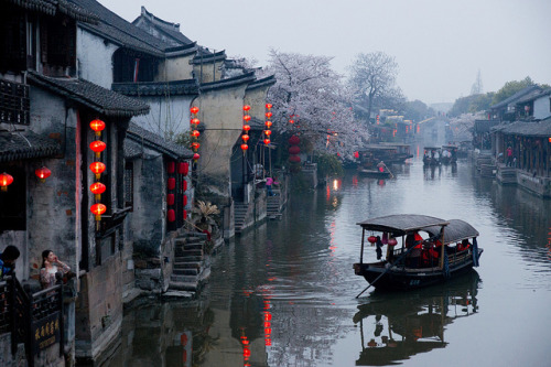uncommonjones:  Sakura in Xitang via photopin cc Xitang, Zhejiang, China