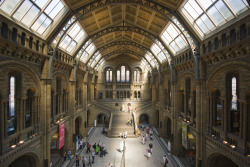 allthingseurope:    Natural History Museum, London (by weyerdk)