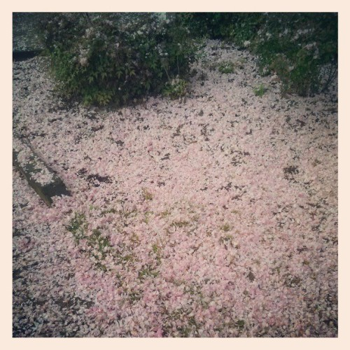 Aftermath, it's a pink snowstorm
