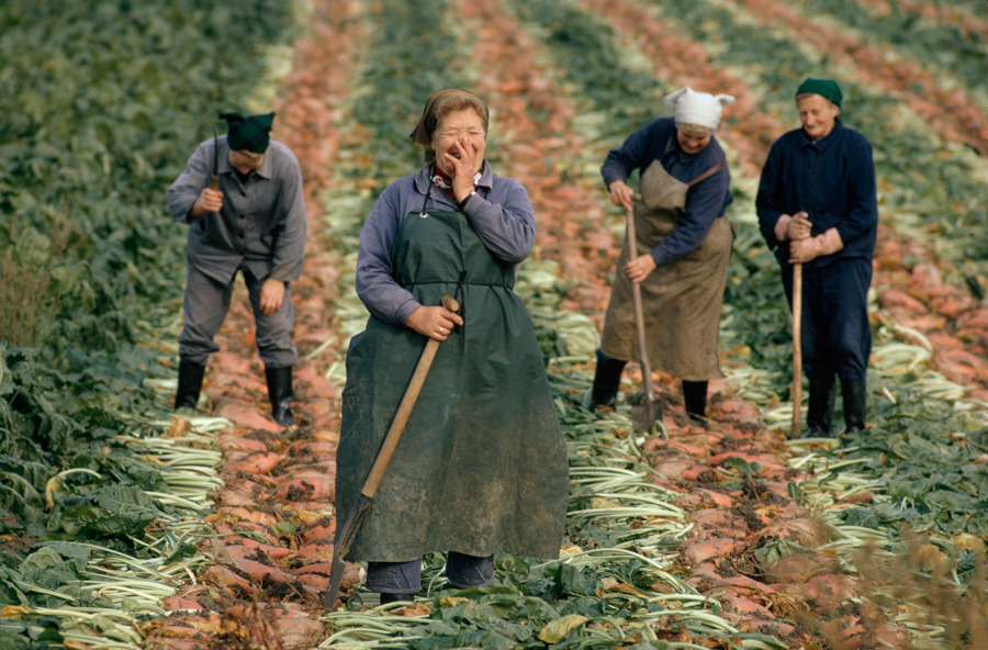 natgeofound:  East German women harvesting sugar beets, September 1974.Photograph by Gordon Gahan, National Geographic