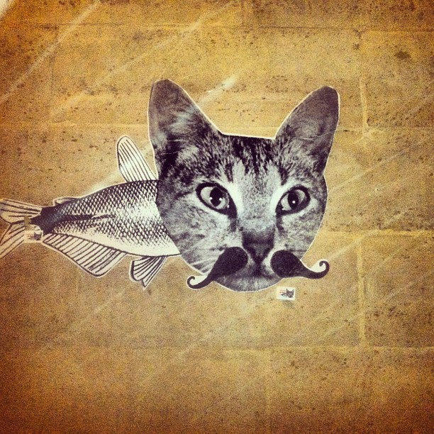 Cat-fish-stach (at Le Marais)