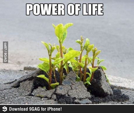 The power of nature as well