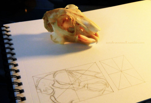 sarah-oconnell:  Workin' on orthographic views for my Independent Study. c: