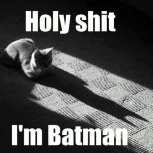 thommyyyy:  This is so #cute & #funny! :-) #batman #kitty #cat #shadow #instacute <3   Click Here For More Drugs And Cats!