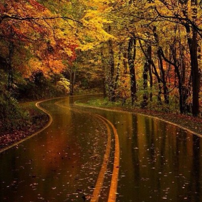 only1hockey-this-is-the-yellow-leaf-road-in