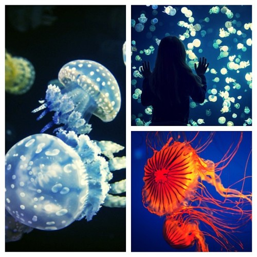 It's an invasion! Stunning images of jellyfish at the #Vancouver Aquarium. (Ward Perrin/PNG)