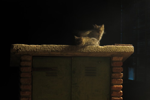 Cat on a Red hot roof