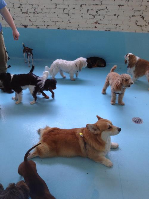 thefrogman:  Corgis are… different.  [reddit]