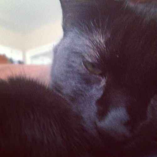 i love waking up to this face!😍😻 #tunafacemelt #instapet #catstagram #catsofinstagram #petstagram