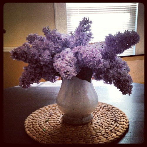 Lilacs in the dining room. So fragrant! #accidentalgardener