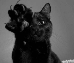 cat Black and White animal meow Witch pet darkness goth gothic Black Cat wiccan wicca claws nu goth all black dark blog witchy dark beauty gothic beauty gothic blog