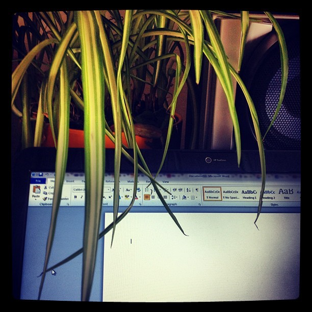 My spider plant is a physical metaphor; writers block.