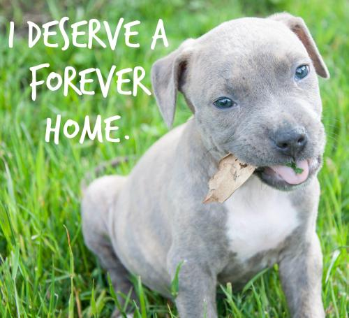 officialpeta:  Franco (AKA the Cutest Puppy EVER) has made a wonderful recovery since being surrendered to PETA & is looking for a forever home! REBLOG this if you think he deserves one!  Adoption info here: http://peta.vg/1gq