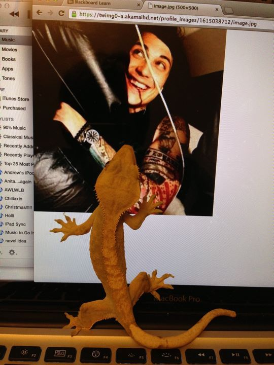 I was browsing the internet and my gecko decided to help. I know that feel, Yoshi…