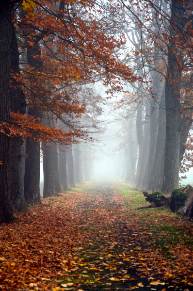 woodendreams:  (by anneke van dijk.)