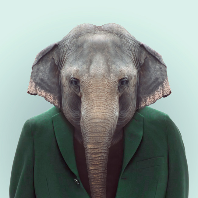zooportraits:  ELEPHANT by Yago Partal for ZOO PORTRAITS