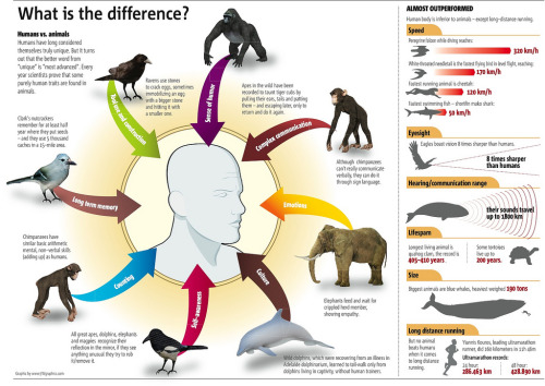 What is the difference between humans and animals?
