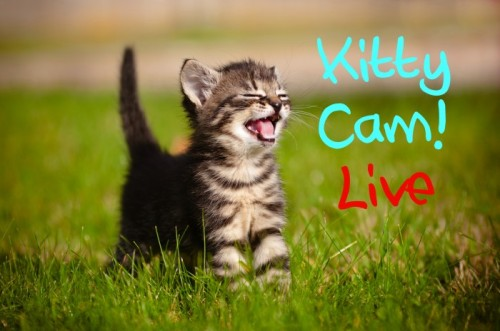LANGLEY ANIMAL PROTECTION SOCIETY KITTY CAM!by HelloGiggles Team http://bit.ly/YPvN7w