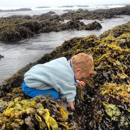 Angus couldn't get enough urchin crab and anemone hunting in #montanadeoro