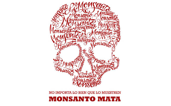 "thepeoplesrecord:  Mexico: Ground Zero in the fight against Monsanto for the future of maizeMay 13, 2013 In the 2011 action-thriller ""Unknown"", scientists are persecuted by the biotech industry because they plan the open release of a drought- and pest-resistant strain of maize that could help eradicate world hunger. There are certain parallels with the situation today in Mexico, the birthplace of maize, which is at the centre of the global fight to protect the crop's diversity from the onslaught of genetically modified varieties. ""It's the first time in history that one of the most important harvests in the world is threatened in its centre of diversity,"" Pat Mooney, the head of the Action Group on Erosion, Technology and Concentration (ETC Group), an international NGO, told IPS. ""If we let the companies win, there will be no chance to defend them in other parts. What is happening here is of key importance for the rest of the world."" Civil society organisations are raising their guard against the possibility that the government of conservative President Enrique Peña Nieto of the Institutional Revolutionary Party (PRI) may approve commercial cultivation of transgenic maize, a move widely condemned by environmentalists and other activists, academics, and small and medium producers due to the risks it poses. In September, the U.S. corporations Monsanto, Pioneer and Dow Agrosciences presented six applications for commercial plantations of transgenic maize on more than two million hectares in the northwestern state of Sinaloa and the northeastern state of Tamaulipas. Moreover, in January these companies and Syngenta presented 11 applications for pilot and experimental plots to grow transgenic corn on 622 hectares in the northern states of Chihuahua, Coahuila, Durango, Sinaloa and Baja California. And Monsanto has applied for an additional plantation in an unspecified area in the north of the country. Since 2009, the Mexican government has issued 177 permits for experimental plots of transgenic maize covering an area of 2,664 hectares, according to the latest figures provided by the authorities. But large-scale commercial release of GM maize has not yet been authorised. ""They are going to serve up transgenic maize on every table in spite of the fact that food sovereignty depends on growing native corn,"" said Evangelina Robles, a member of Red en Defensa del Maíz (Maize Defence Network) which campaigns against GM corn. ""As a result, we have to demand its prohibition by the state,"" she told IPS. Mexico produces 22 million tonnes of maize a year, and imports 10 million tonnes, according to the agriculture ministry. The country purchased about two million tonnes of GM maize from South Africa over the last two years, and is set to import another 150,000 tonnes. Three million maize farmers cultivate about eight million hectares in Mexico, two million of which are devoted to family farming. White maize is the main crop for human consumption, while yellow maize, for animal feed, is largely imported. The National Council for the Evaluation of Social Policy (CONEVAL) estimates the country's annual consumption of maize at 123 kg per person, compared to a world average of 16.8 kg. The historical link with pre-Columbian indigenous cultures gives maize a strong symbolic and cultural significance throughout Mesoamerica, the area comprising southern Mexico and Central America, where it was domesticated, producing 59 landraces or native strains and 209 varieties. In the state of Mexico, adjacent to the capital city's Federal District, small farmers have found their native maize to be contaminated with GM maize, according to tests carried out by students at the state Autonomous Metropolitan University. ""We swapped seeds and decided to do some tests. Now we are more careful when exchanging, and over who participates in the fair, although we still have to carry out confirmation tests,"" activist Sara López, of the Red Origen Volcanes (Volcanoes Origins Network), an association of small farmers that has been organising producers' fairs since 2010, told IPS. Environmental, scientific and small farmers' organisations have discovered GM contamination of native maize in Chihuahua, Hidalgo, Puebla and Oaxaca. Contamination is ""a carefully and perversely planned strategy,"" according to Camila Montecinos, from the Chile office of GRAIN, an international NGO that works to support small farmers and social movements in their struggles for community-controlled and biodiversity-based food systems. Transnational food companies ""chose maize, soy and canola because of their enormous potential for contamination (by wind-pollination),"" said Montecinos, one of the experts participating in the preliminary hearing on transgenic contamination of native maize at the Permanent Peoples' Tribunal, an international opinion tribunal which opened its Mexican chapter in 2012 and will conclude with a non-binding ruling in 2014. ""When contamination spreads, the companies claim that the presence of transgenic crops must be recognised and legalised,"" in order to pave the way for marketing the GM seeds, to which they own the patents, she said. Mexico's environment minister, Juan Guerra, has said that all available scientific information will be examined before a decision is made. But that will not be easy. The National Confederation of Campesinos (Small Farmers), one of the main internal movements in the ruling PRI, has had an agreement with Monsanto since 2007 under which the company is to ""conserve"" native varieties. Meanwhile, the Peña Nieto government still has not approved regulations for the format and contents of reports on the results of releasing GM organisms, and the possible threats to the environment, biodiversity, and the health of animals, plants and fish. ""For 18 years, corporations have been unsuccessful in convincing the people that their products are good. Maize is being used as a means of political and economic control. People need maize to be alive,"" the ETC Group's Mooney said. The transgenic seeds on the market are herbicide-resistant Roundup Ready and Bt (for the Bacillus thuringiensis gene they carry for pest resistance) versions of cotton, maize, soy and canola. While they are legally grown in Canada, the United States, Argentina, Brazil and Spain, they are banned for example in China, Russia and the majority of the EU countries. Recent studies published in the United States show that transgenic crops do not significantly increase yield per hectare, do not reduce herbicide use, and do not increase resistance to pests, in contrast to biotech industry claims. ""We are analysing what legal action to take against the new applications (to plant GM maize),"" said Robles, of the Maize Defence Network. SourcePhoto   Monsanto KILLS."