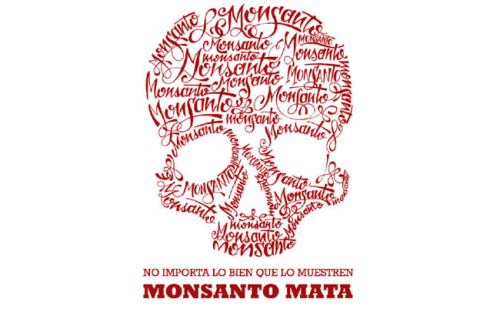 "Mexico: Ground Zero in the fight against Monsanto for the future of maizeMay 13, 2013 In the 2011 action-thriller ""Unknown"", scientists are persecuted by the biotech industry because they plan the open release of a drought- and pest-resistant strain of maize that could help eradicate world hunger. There are certain parallels with the situation today in Mexico, the birthplace of maize, which is at the centre of the global fight to protect the crop's diversity from the onslaught of genetically modified varieties. ""It's the first time in history that one of the most important harvests in the world is threatened in its centre of diversity,"" Pat Mooney, the head of the Action Group on Erosion, Technology and Concentration (ETC Group), an international NGO, told IPS. ""If we let the companies win, there will be no chance to defend them in other parts. What is happening here is of key importance for the rest of the world."" Civil society organisations are raising their guard against the possibility that the government of conservative President Enrique Peña Nieto of the Institutional Revolutionary Party (PRI) may approve commercial cultivation of transgenic maize, a move widely condemned by environmentalists and other activists, academics, and small and medium producers due to the risks it poses. In September, the U.S. corporations Monsanto, Pioneer and Dow Agrosciences presented six applications for commercial plantations of transgenic maize on more than two million hectares in the northwestern state of Sinaloa and the northeastern state of Tamaulipas. Moreover, in January these companies and Syngenta presented 11 applications for pilot and experimental plots to grow transgenic corn on 622 hectares in the northern states of Chihuahua, Coahuila, Durango, Sinaloa and Baja California. And Monsanto has applied for an additional plantation in an unspecified area in the north of the country. Since 2009, the Mexican government has issued 177 permits for experimental plots of transgenic maize covering an area of 2,664 hectares, according to the latest figures provided by the authorities. But large-scale commercial release of GM maize has not yet been authorised. ""They are going to serve up transgenic maize on every table in spite of the fact that food sovereignty depends on growing native corn,"" said Evangelina Robles, a member of Red en Defensa del Maíz (Maize Defence Network) which campaigns against GM corn. ""As a result, we have to demand its prohibition by the state,"" she told IPS. Mexico produces 22 million tonnes of maize a year, and imports 10 million tonnes, according to the agriculture ministry. The country purchased about two million tonnes of GM maize from South Africa over the last two years, and is set to import another 150,000 tonnes. Three million maize farmers cultivate about eight million hectares in Mexico, two million of which are devoted to family farming. White maize is the main crop for human consumption, while yellow maize, for animal feed, is largely imported. The National Council for the Evaluation of Social Policy (CONEVAL) estimates the country's annual consumption of maize at 123 kg per person, compared to a world average of 16.8 kg. The historical link with pre-Columbian indigenous cultures gives maize a strong symbolic and cultural significance throughout Mesoamerica, the area comprising southern Mexico and Central America, where it was domesticated, producing 59 landraces or native strains and 209 varieties. In the state of Mexico, adjacent to the capital city's Federal District, small farmers have found their native maize to be contaminated with GM maize, according to tests carried out by students at the state Autonomous Metropolitan University. ""We swapped seeds and decided to do some tests. Now we are more careful when exchanging, and over who participates in the fair, although we still have to carry out confirmation tests,"" activist Sara López, of the Red Origen Volcanes (Volcanoes Origins Network), an association of small farmers that has been organising producers' fairs since 2010, told IPS. Environmental, scientific and small farmers' organisations have discovered GM contamination of native maize in Chihuahua, Hidalgo, Puebla and Oaxaca. Contamination is ""a carefully and perversely planned strategy,"" according to Camila Montecinos, from the Chile office of GRAIN, an international NGO that works to support small farmers and social movements in their struggles for community-controlled and biodiversity-based food systems. Transnational food companies ""chose maize, soy and canola because of their enormous potential for contamination (by wind-pollination),"" said Montecinos, one of the experts participating in the preliminary hearing on transgenic contamination of native maize at the Permanent Peoples' Tribunal, an international opinion tribunal which opened its Mexican chapter in 2012 and will conclude with a non-binding ruling in 2014. ""When contamination spreads, the companies claim that the presence of transgenic crops must be recognised and legalised,"" in order to pave the way for marketing the GM seeds, to which they own the patents, she said. Mexico's environment minister, Juan Guerra, has said that all available scientific information will be examined before a decision is made. But that will not be easy. The National Confederation of Campesinos (Small Farmers), one of the main internal movements in the ruling PRI, has had an agreement with Monsanto since 2007 under which the company is to ""conserve"" native varieties. Meanwhile, the Peña Nieto government still has not approved regulations for the format and contents of reports on the results of releasing GM organisms, and the possible threats to the environment, biodiversity, and the health of animals, plants and fish. ""For 18 years, corporations have been unsuccessful in convincing the people that their products are good. Maize is being used as a means of political and economic control. People need maize to be alive,"" the ETC Group's Mooney said. The transgenic seeds on the market are herbicide-resistant Roundup Ready and Bt (for the Bacillus thuringiensis gene they carry for pest resistance) versions of cotton, maize, soy and canola. While they are legally grown in Canada, the United States, Argentina, Brazil and Spain, they are banned for example in China, Russia and the majority of the EU countries. Recent studies published in the United States show that transgenic crops do not significantly increase yield per hectare, do not reduce herbicide use, and do not increase resistance to pests, in contrast to biotech industry claims. ""We are analysing what legal action to take against the new applications (to plant GM maize),"" said Robles, of the Maize Defence Network. SourcePhoto   Monsanto KILLS."