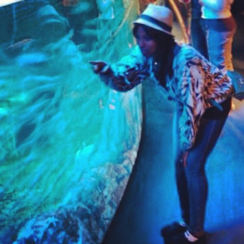 """One fish, Two fish, Red fish, Blue fish.."" #TBT #ImBlue #LongBeach #Aquarium #OldManSweater 🐟🐬🐠"