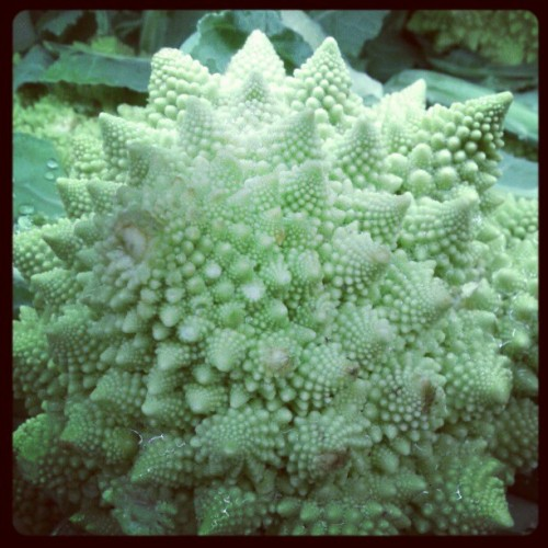 Fractals in Whole Foods. (at Whole Foods Market)