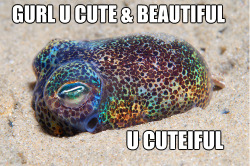 bobtail squid compliments