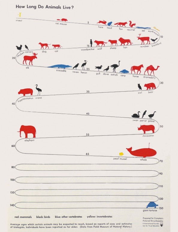 "How Long Do Animals Live? How Can We Live Longer? An infographic exploration of animal longevity, from hare-today-gone-tomorrow to near-eternal-tortoises. What do you think makes some animals live longer than others, predators notwithstanding? Google that and let me know what you find, science detectives. As for what it means for the future longevity of humans, check out these links:  How to achieve massive longevity without overpopulation What synthetic biology and utilizing nature's genetic tools might mean for tweaking our lifespan. Finally, a thought experiment: If our cells can become somewhat ""immortal"" in diseases like cancer, what's to say that we can't harness some of that biology and apply it to extending human lives without disease? (image via Visual.ly, links via Kirstin Butler)"