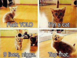 This made me laugh so hard  It's like a little kitty rap