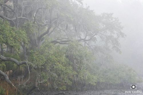 In the mist. December on the tidelands #hiltonhead    (via TumbleOn)