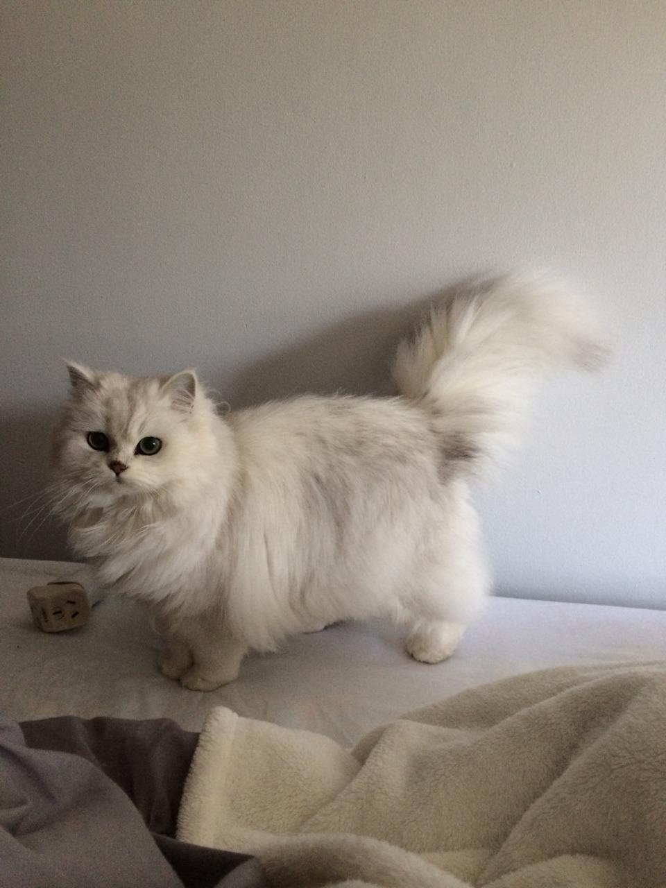 Tiny Legs Cat Tumblr