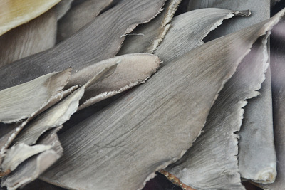 "New York Legislature Votes to Ban Trade of Shark Fins I've never had shark fin soup, but there are apparently 66 restaurants in New York City that carry it on their menus, according to the Animal Welfare Institute.  That's likely to change, now that New York legislators voted to ban the trade of shark fins. If Gov. Cuomo signs the bill into law, New York would become the 8th state to ban the delicacy.  The fins of as many as 73 million sharks are used to make shark fin soup each year, according to the Humane Society. By one estimate, there are 90 percent fewer sharks worldwide than there were 50 years ago. Due to its huge Chinese population New York is one of the largest markets for shark fins outside of Asia and the largest port of entry for shark fins on the East Coast. ""Every banquet hall that caters to Chinese-style weddings serve shark fin,"" said Patrick Kwan, Director of Grassroots Organizing at the Humane Society. And he added, ""just because shark fin is not on the menu, doesn't mean it's not available."" California also banned shark fins, despite a lawsuit by Asian groups claiming it was discriminatory. Shark fin photo by chooyutshing"