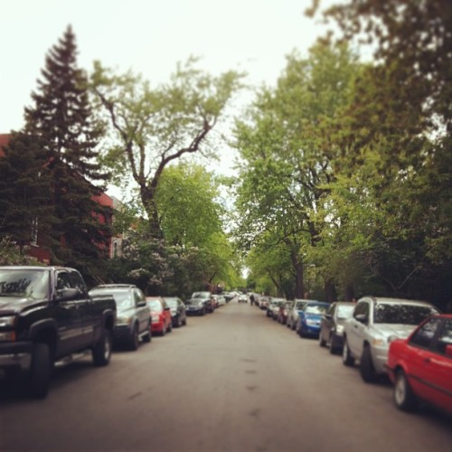 Spring has sprung in the plateau. #plateau #montreal #trees #spring #cars #street