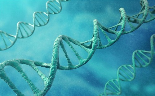 "wildcat2030:  Computer files stored accurately on DNA in new breakthrough Scientists have recorded data including Shakespearean sonnets and an MP3 file on strands of DNA, in a breakthrough which could see millions of records stored on a handful of molecules rather than computer drives. - By translating computerised files into DNA similar to that found in plants and animals, the researchers claim it is possible to store a billion books' worth of data for thousands of years in just a small test tube. Although the method is expensive, it could still be much more efficient than hard drives or magnetic tape for long-term storage of large sets of data such as government records, the scientists said. Within a decade, they expect the technique to have become cheap enough that DNA storage could become cost-efficient for the public to store lifelong keepsakes like wedding videos. Dr Nick Goldman of the European Bioinformatics Institute, who led the study, said: ""We already know that DNA is a robust way to store information because we can extract it from bones of woolly mammoths, which date back tens of thousands of years, and make sense of it. ""It's also incredibly small, dense and does not need any power for storage, so shipping and keeping it is easy."" (via Computer files stored accurately on DNA in new breakthrough - Telegraph)"