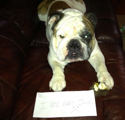 "dogshaming:  ""I ate baby Jesus while you were in the shower mommy""Murphy ate baby Jesus in the manger and chewed off Joseph's hand while mommy was in the shower!…View Postshared via WordPress.com"