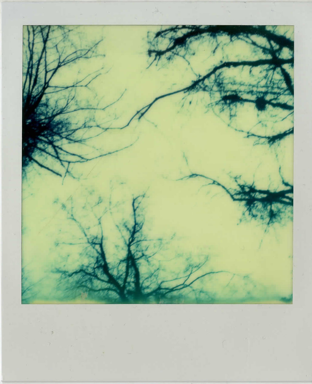 Branches.  SX-70 Polaroid, Impossible film.