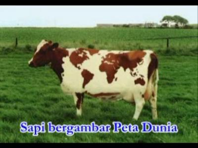#worldmap #cow #subhanallah