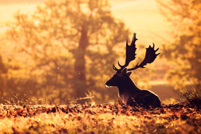 "b3autyl0ver:   500px / Photo ""warm"" by Mark Bridger"