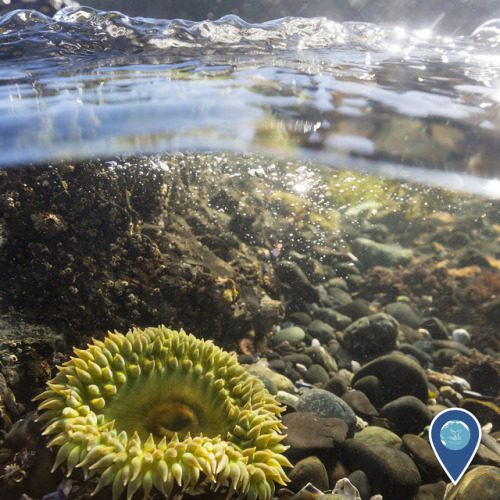 noaasanctuaries: