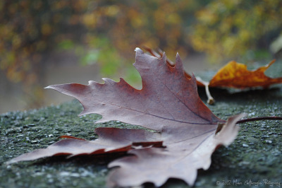 The Autumn Leaves..[Explored] by Manos Eleftheroglou (Photography) on Flickr.