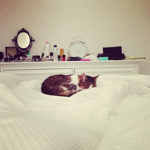 Sleepy kitty! #white #bed #catsofinstagram #cat #sleep 😽🐱❤️