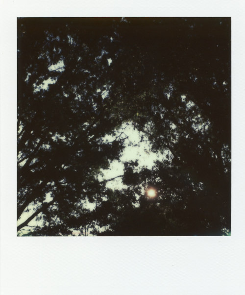 j-j-j-j-j-j:  a polaroid i didn't post