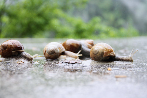 animals-animals-animals:  Meeting in the Rain (by waloomeloo)