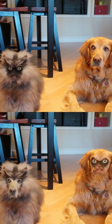 collegehumor:  Cats and Dogs Don't Need This Face Switch Change us back right meow