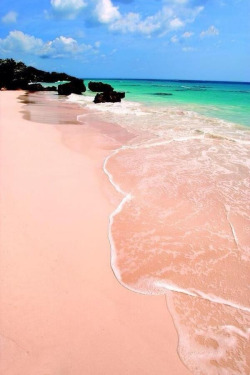 niick4:  The pink beaches of Bermuda